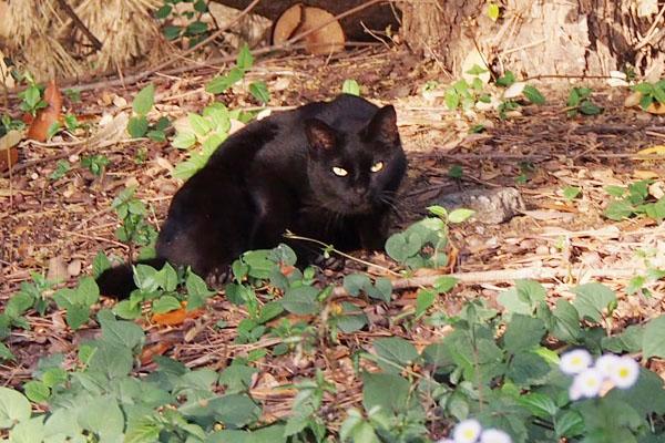 お目メぱっちりの黒猫さん
