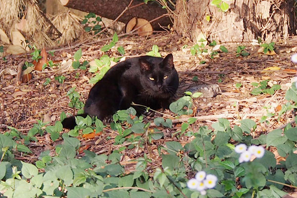 警戒の眼差しの黒猫さん