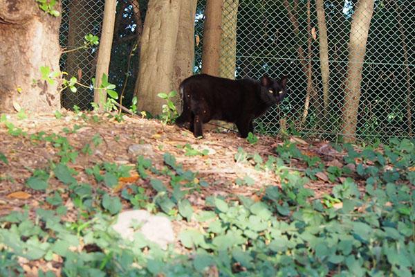 逃げる事にした黒猫さん