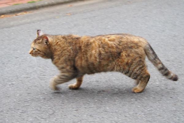 走るサキちゃん