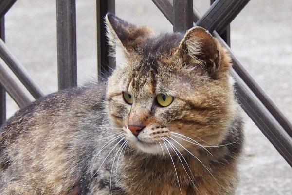 new tabby cat near saki family