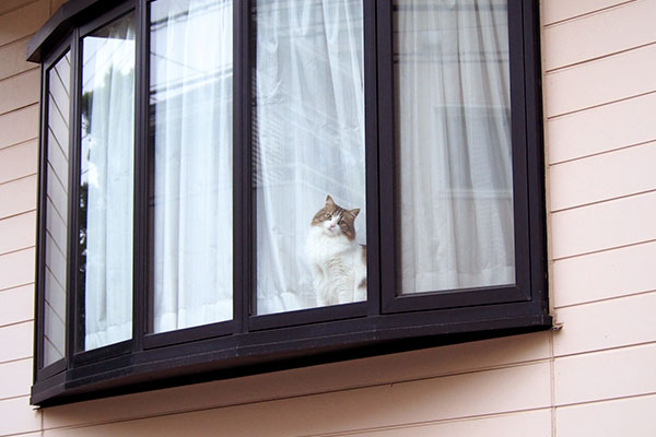 出窓ににゃんこ小首を傾げ遠