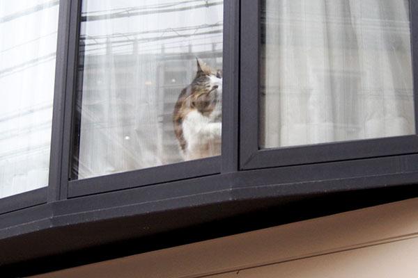 窓枠くんくん