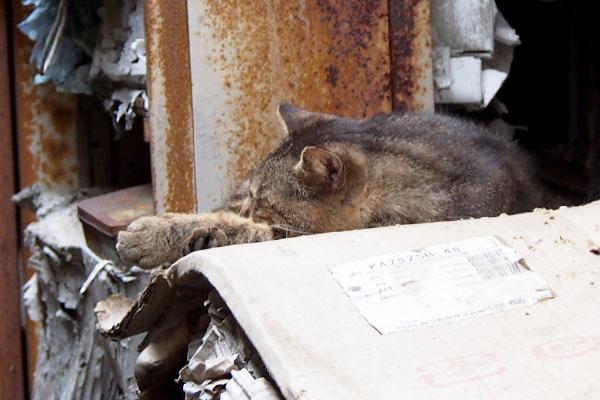 roki sleeping