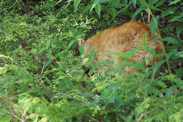 リュウリュウを見ているコダ