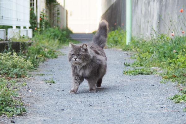 mafu tail up