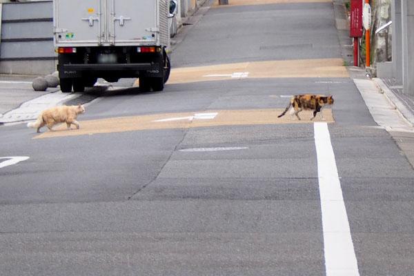 オトワちゃんとナリコ道路を横断中