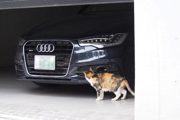 車の匂いを嗅ぐオトワちゃん
