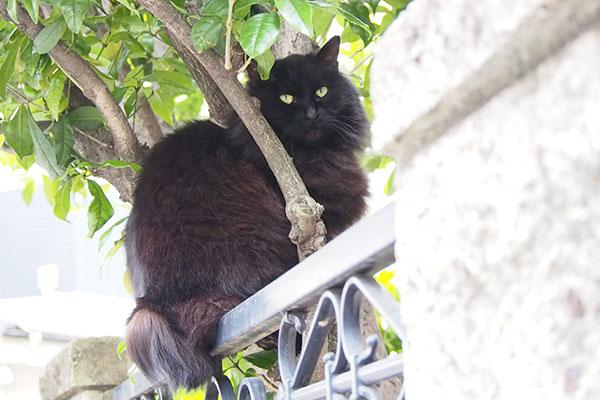 木にまたがるハリマちゃん