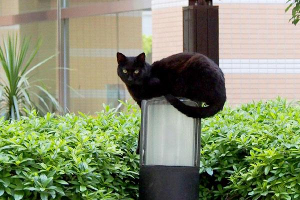 黒猫オブジェの少しアップ