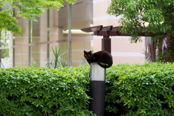 cat objet black cat