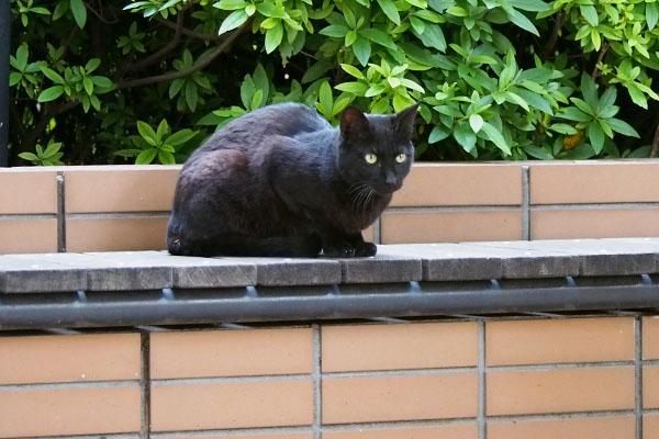 ちまっと座る黒猫さん
