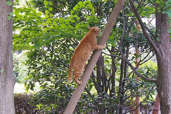 木に登るアン2