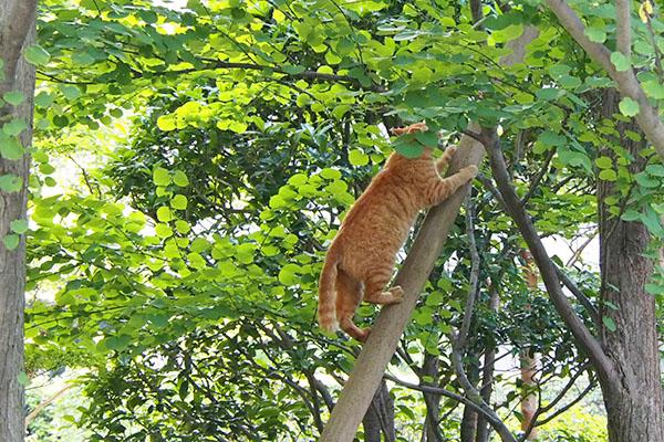 木に登るアン3