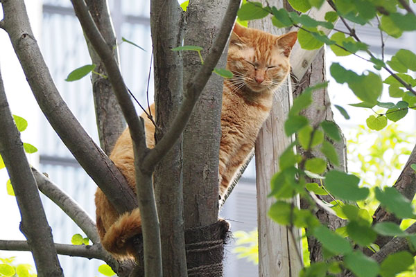 目を閉じるアン木の上