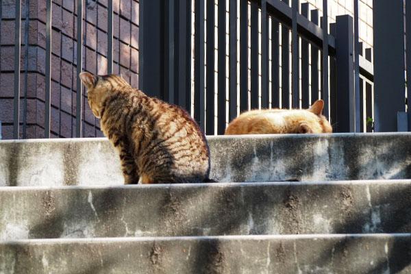 ふたりで階段の上リュウリュウとコダ