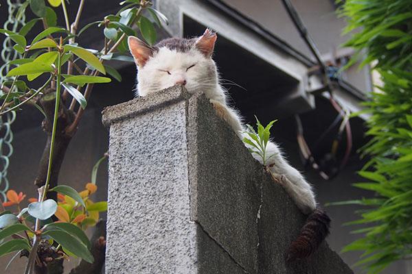 テル塀の上でお昼寝