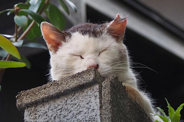 幸せそうな寝顔テル