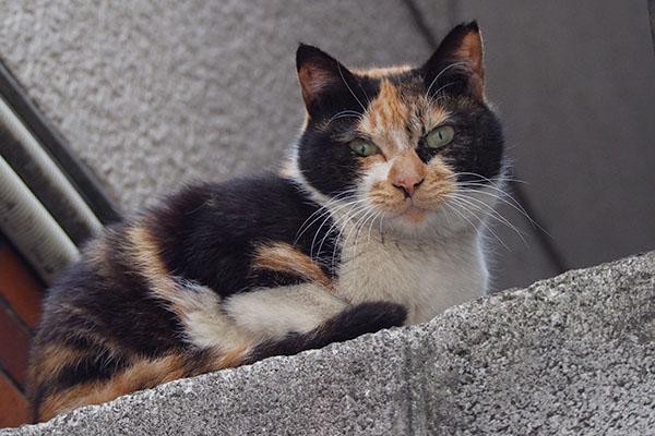 美猫はアップに耐えるリコ
