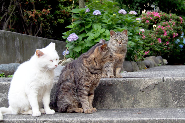 3cats a