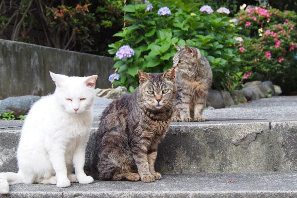 3cats b