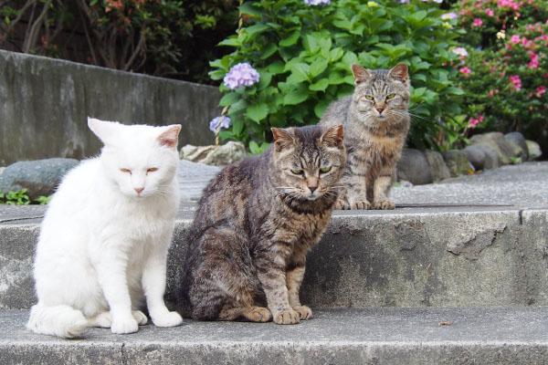3cats c