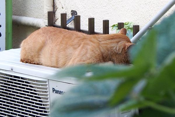 寝てるトト