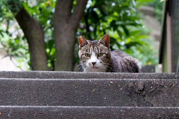 Kaikun_on the top of step