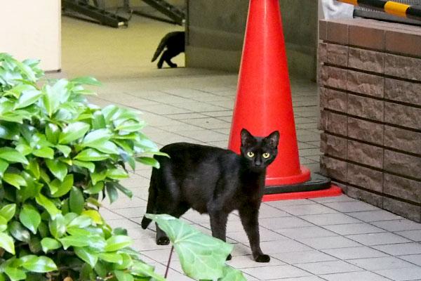 大きな目をした黒猫ママ