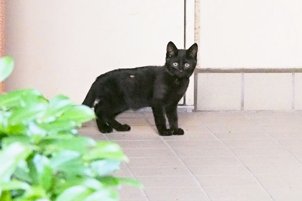 3rd kitten