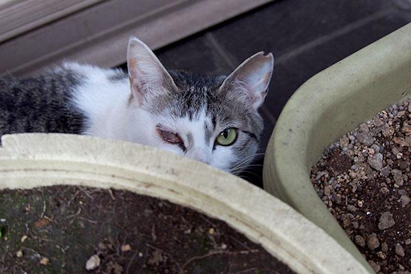 keratitis cat infront of sushishop