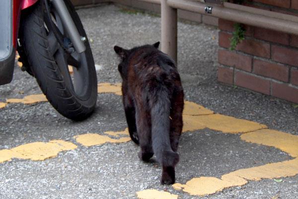 walking fur back