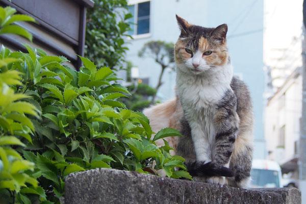 美猫オトワラスト