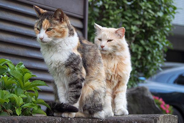 誰かを待っているかのようなオトワとナリコ