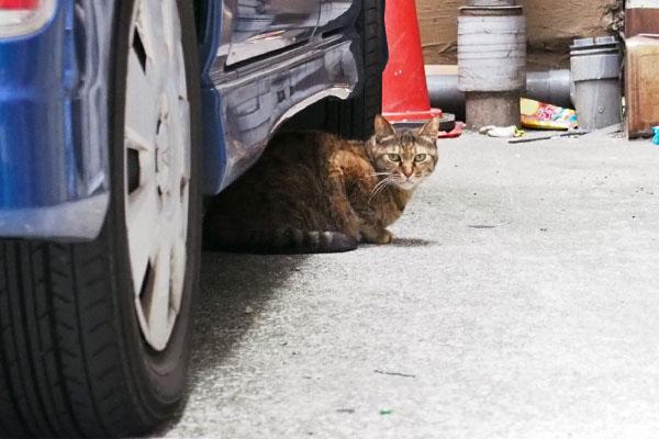 車の下のあき