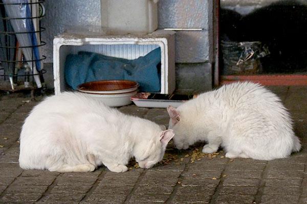 白猫ふたり食べている