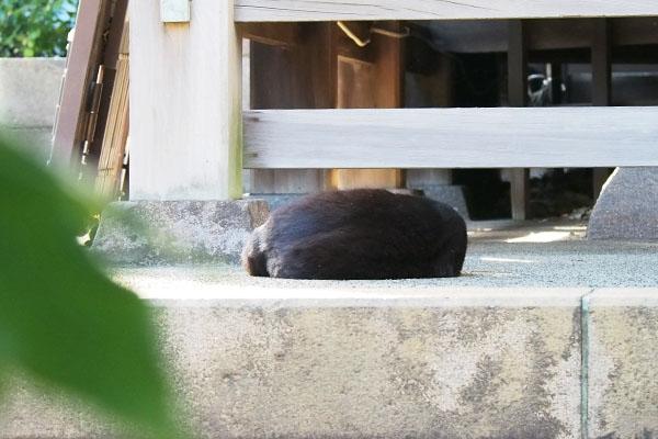 丸くなって寝ているココ