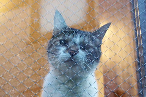 cute face household cat ma