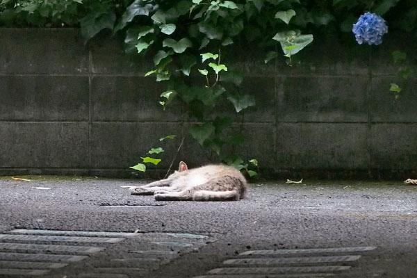 寝ているグリ