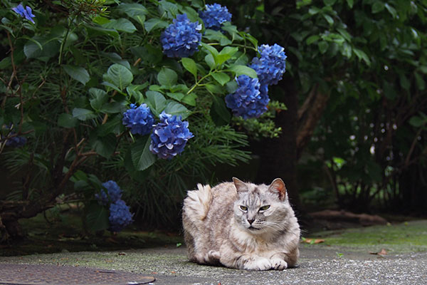 gin sitting in front of hydrangea