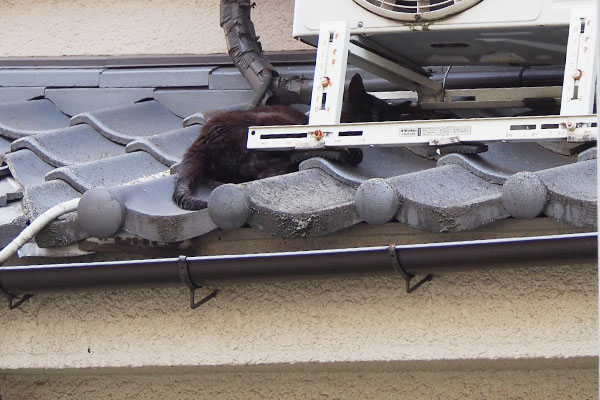 アカシ屋根の上に黒猫