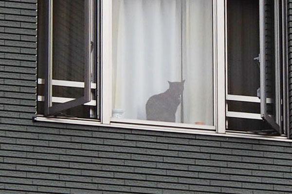 窓辺の猫こちらを見る