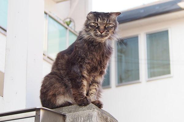 mofukiji duty on house guard