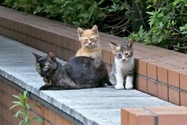 anju with 2 kitten
