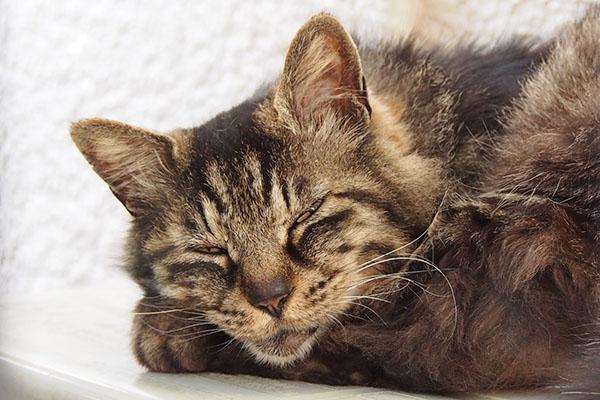 tacchy sleepy face