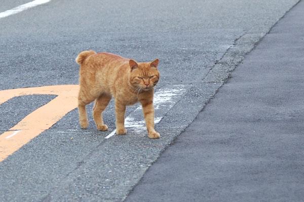 ナチャ 表情固くオス猫らしく