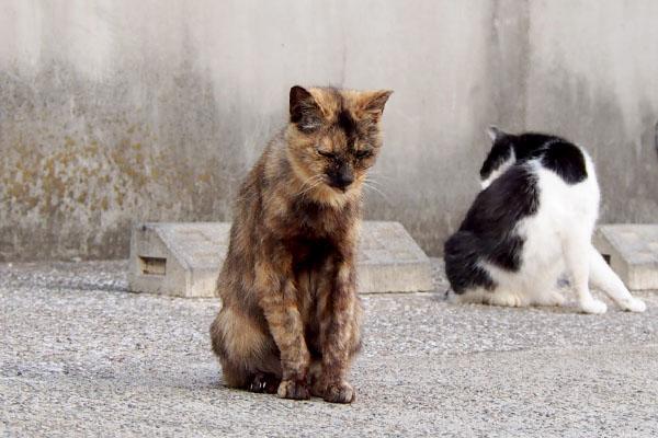 カランとスズ 猫背のカラン