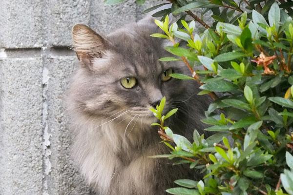 マフ むふふんと葉っぱの匂いを嗅ぐ