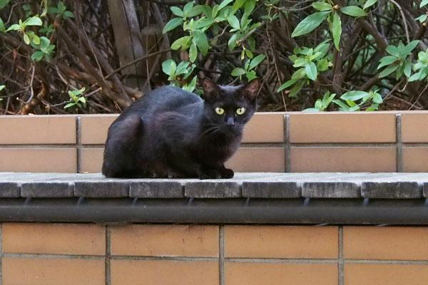 黒猫ちゃん カメラ目線