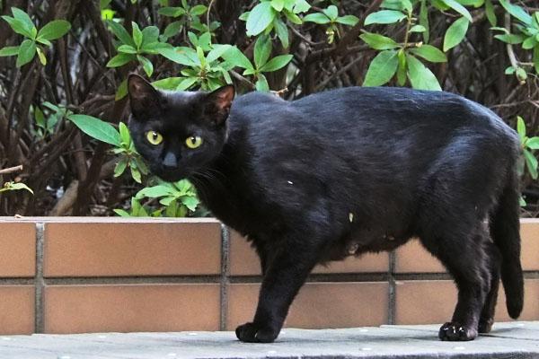 黒猫ちゃん ぎょっとした目
